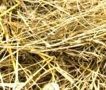 hay mulch