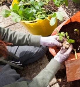 test garden soil